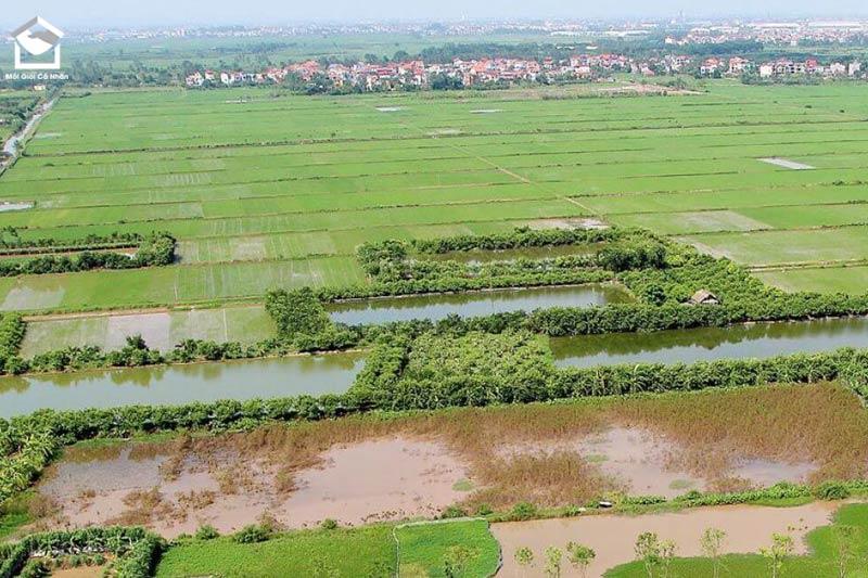 Đất thổ canh là đất gì? Đất thổ canh chính là đất nông nghiệp