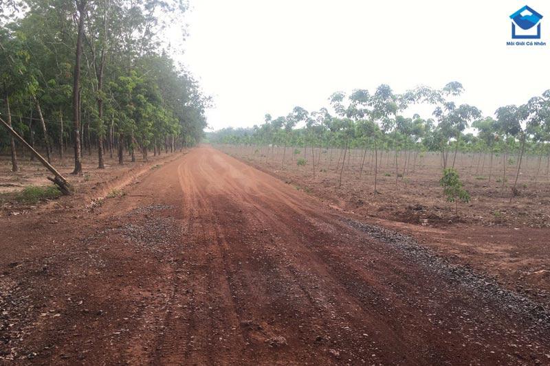 Đất trồng cây lâu năm là đất sử dụng vào mục đích trồng các loại cây được trồng một lần, sinh trưởng và cho thu hoạch trong nhiều năm
