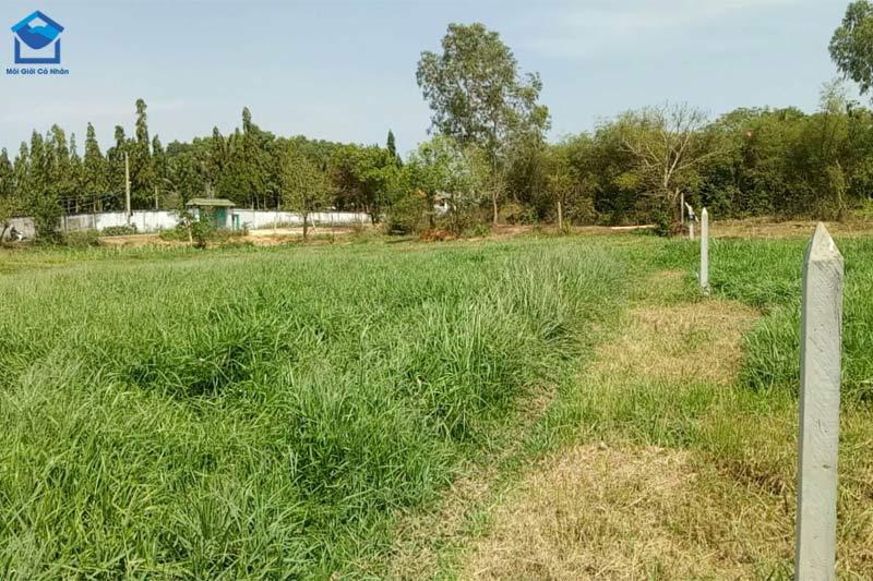 Đất trồng cây lâu năm thuộc nhóm đất nông nghiệp